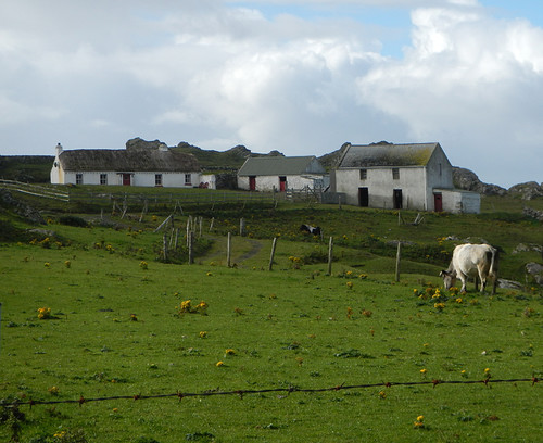 Farmhouses with cows on the Inishowen Peninsula in Ireland