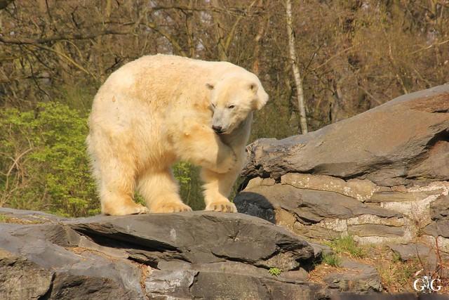 Frühlingstag Tierpark Friedrichsfelde am 02.04.2017148