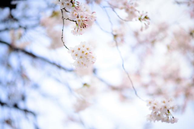 Daydream Bloom