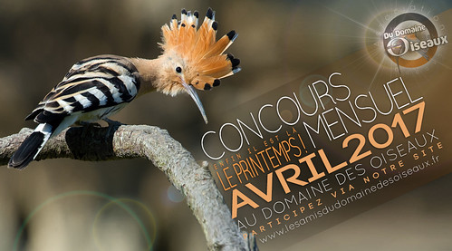 Concours photo AVRIL 2017 - LADDDO