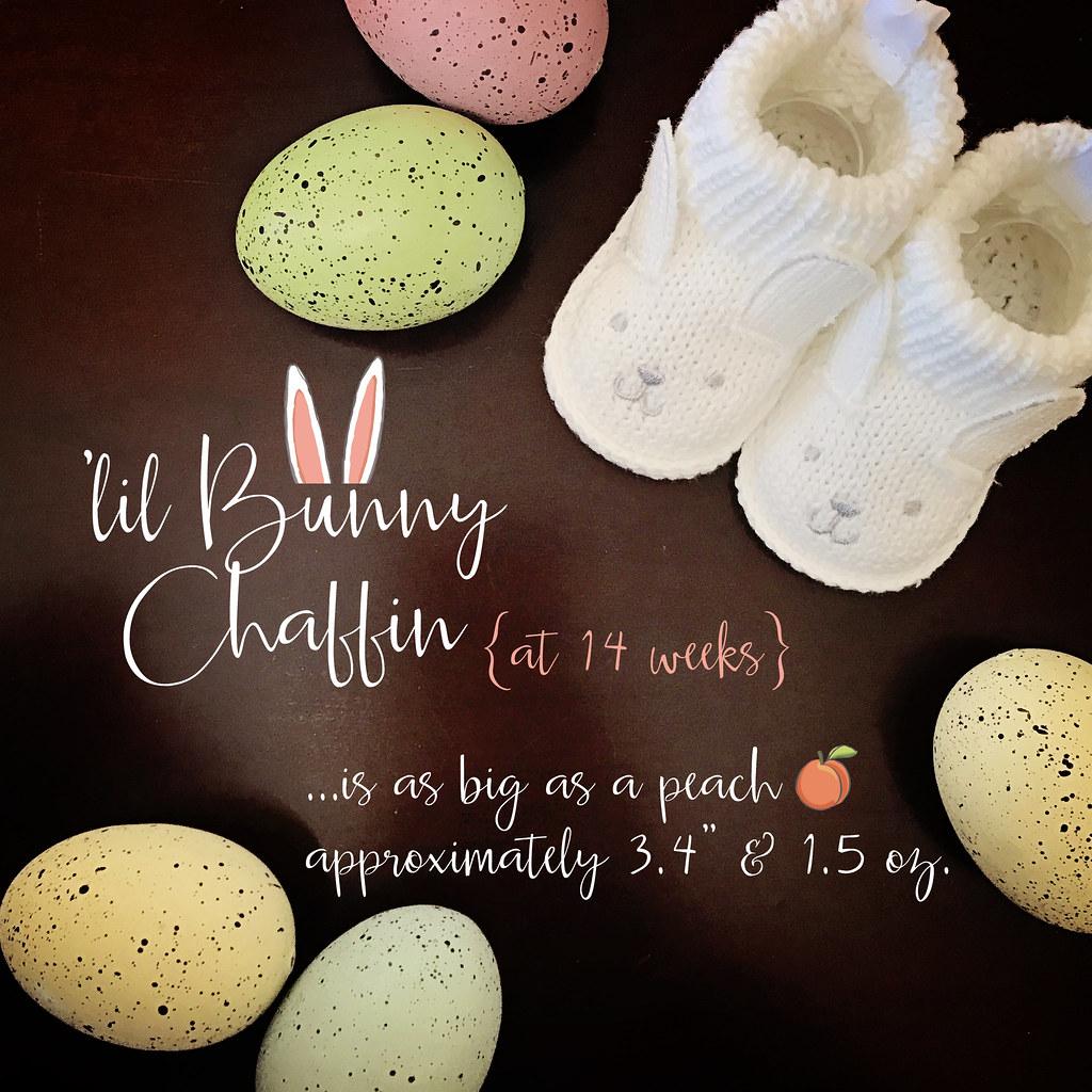 lil bunny chaffin