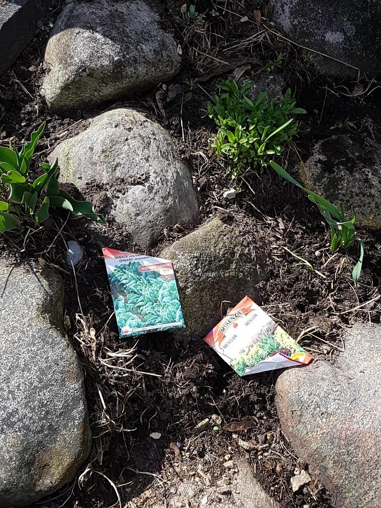 rock garden plantings