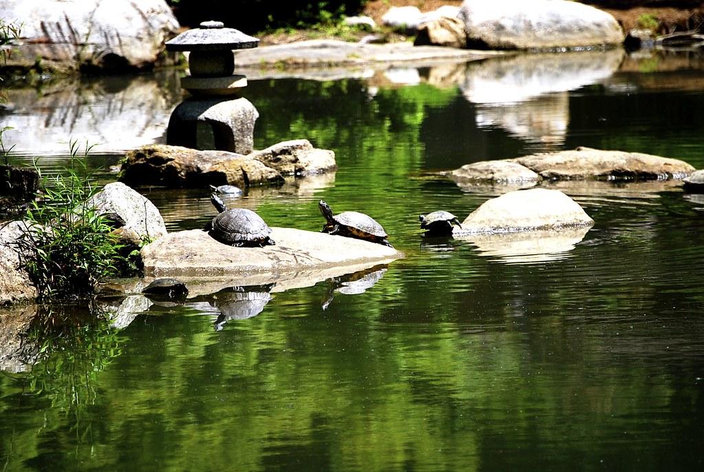 Botanical Gardens, Birmingham, Alabama | Andy Montgomery | Flickr