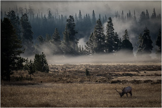 Elk Meadow - by Ron Szymczak | by Nature Camera Club