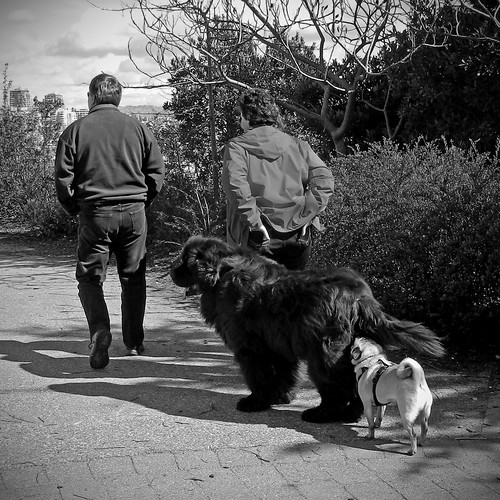 Mill Park Dog Park