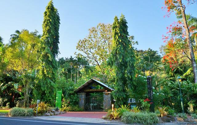 Entry garden with Polyalthia longifolia (Mast Tree)