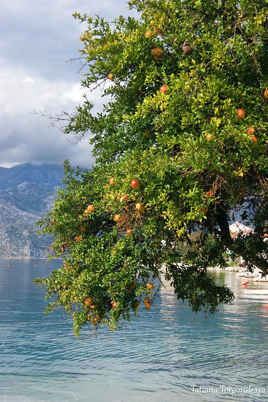 Пейзаж с гранатовым деревом