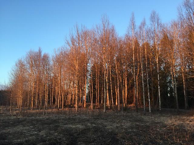 Vårtecken - skog