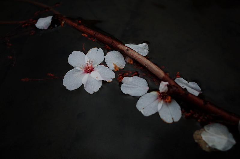 咲くように浮かぶ