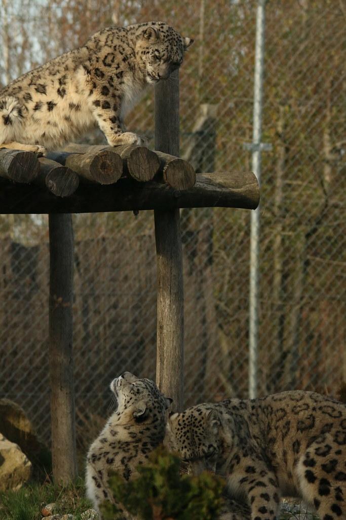 Zoo de la Boissère du Doré 33126308295_ee59498966_b