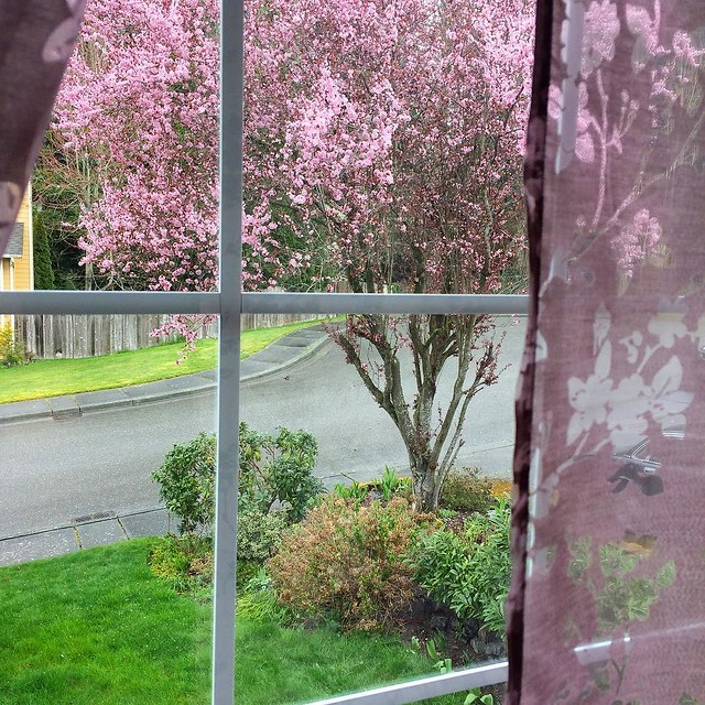 Love this time of year. 🌸