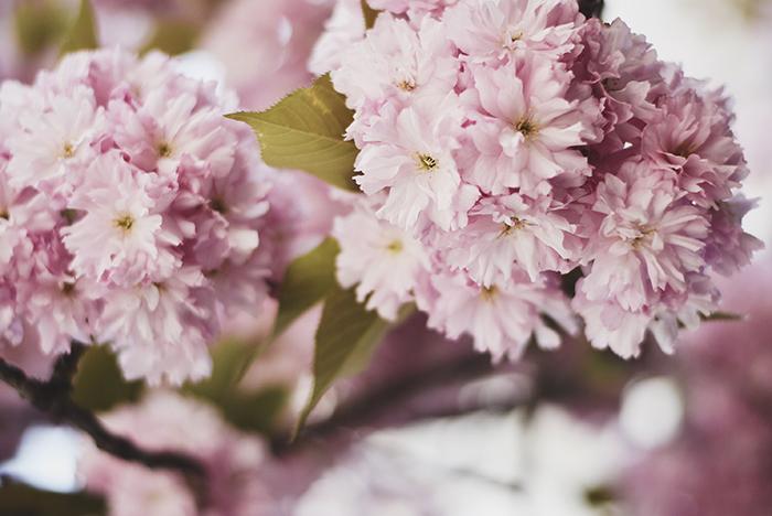 Corset-Belt-Cherry-Blossom-6