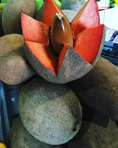 from @mariacoronaproduce  -  #Sweet Mamey!! at #mariacoronaproduce  booth 034 🌱🌱 🌱#fruit #mamey #sapote #mameysapote #dulce #sweet #delious #homestead #hollywoodfl - #freshAndHearty #fruitsmarket #fruit #tropical #YellowGreenFar | by YellowGreenFarmersMarket