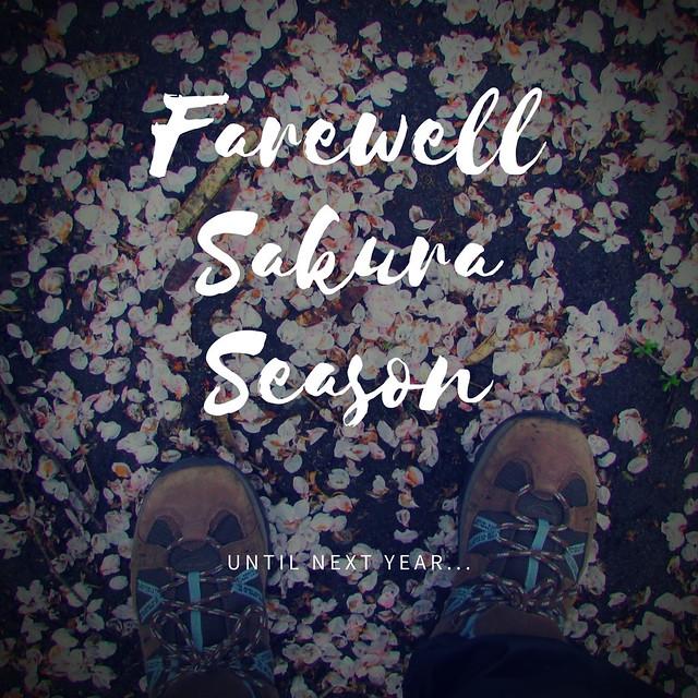 Farewell Sakura Season in Vancouver