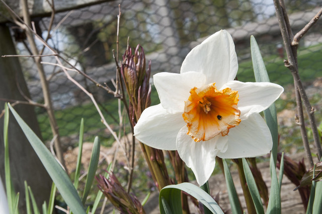Garden Bloggers' Bloom Day: April 2017