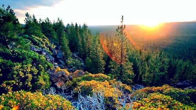 Gilchrist State Forest In Central Oregon Oregon