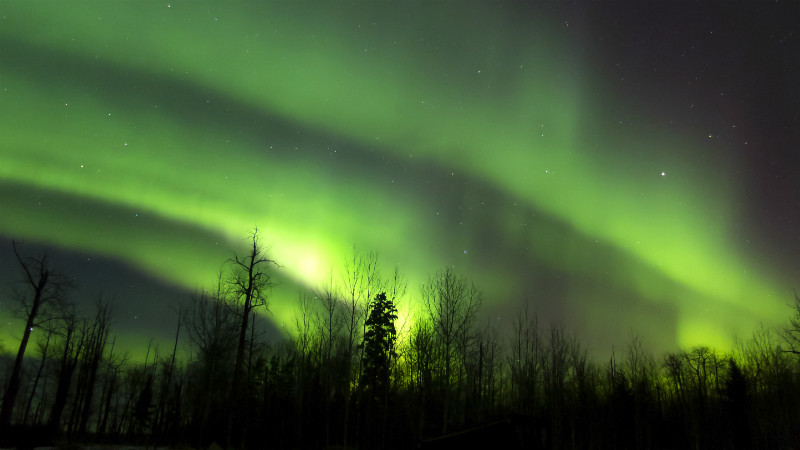 Green Northern Lights over a forest