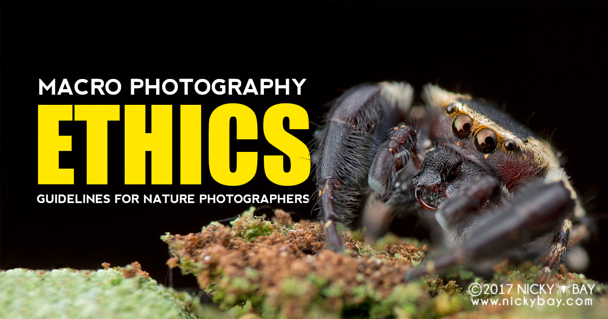 Macro Photography Ethics