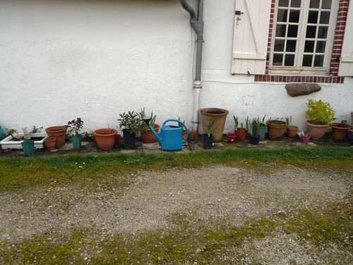 Plants in pots at front, weeded