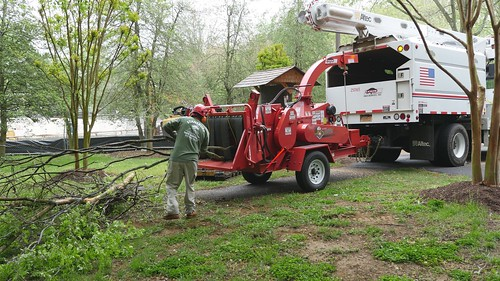 Photo of licensed contractors doing tree cleanup work
