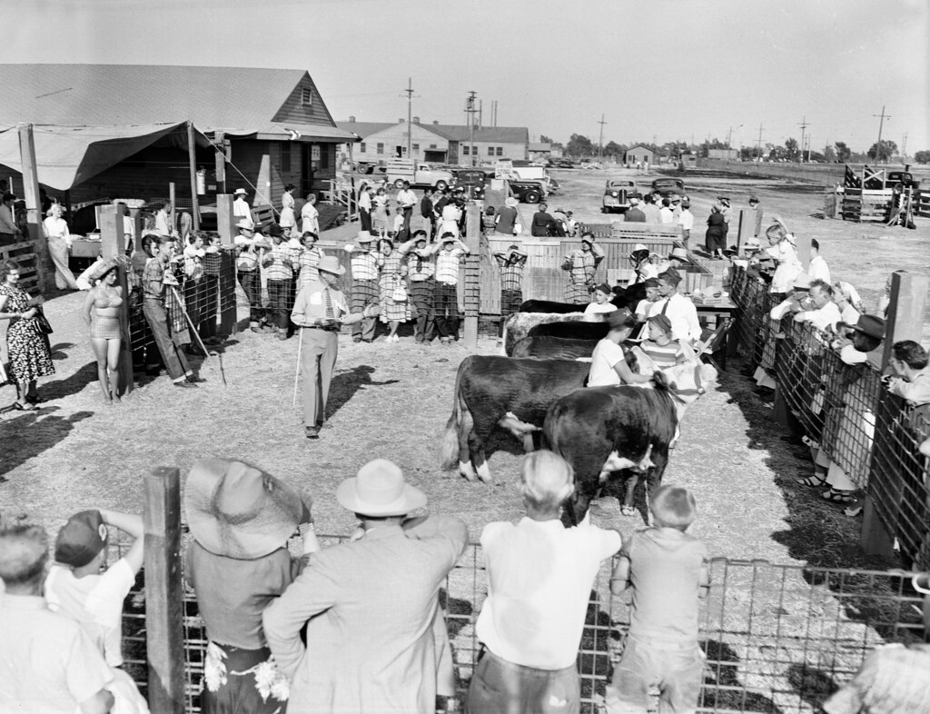 4h event orange county fair aug 1949 there are no