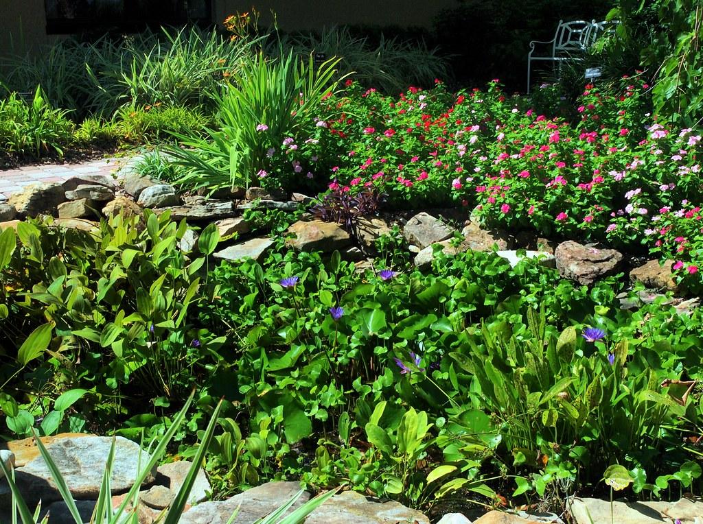 Garden Florida Botanical Gardens Largo Fl Cathy Scola Flickr