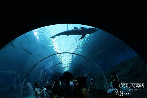160908d Maritime Museum and SEA Aquarium _055