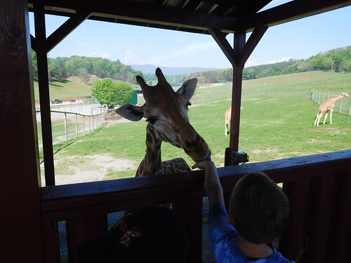 April 28 2017 Safari Park Field Trip 2nd Grade (10)