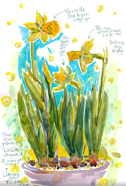 Sketchbook #102: Daffodils