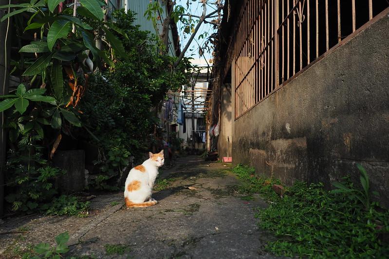 喵星人系列|Cats