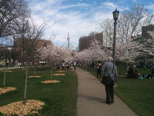 Sakura of Trinity-Bellwoods, 4 #toronto #trinitybellwoods #parks #spring #cherryblossom #sakura