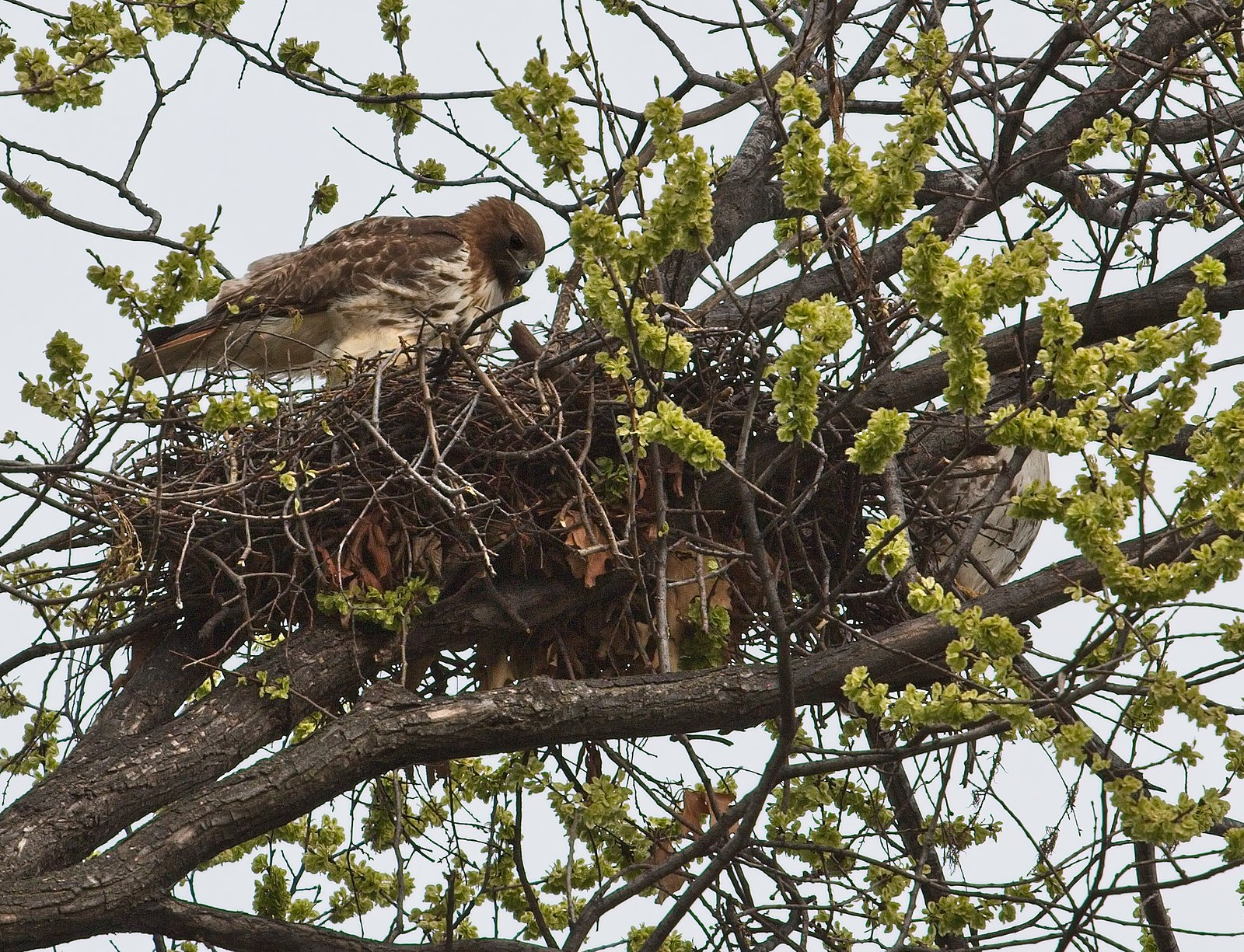 Dora on the nest, Christo hidden on right