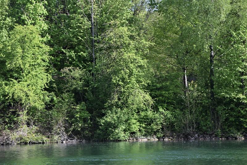 River Aar 30.04 (14)
