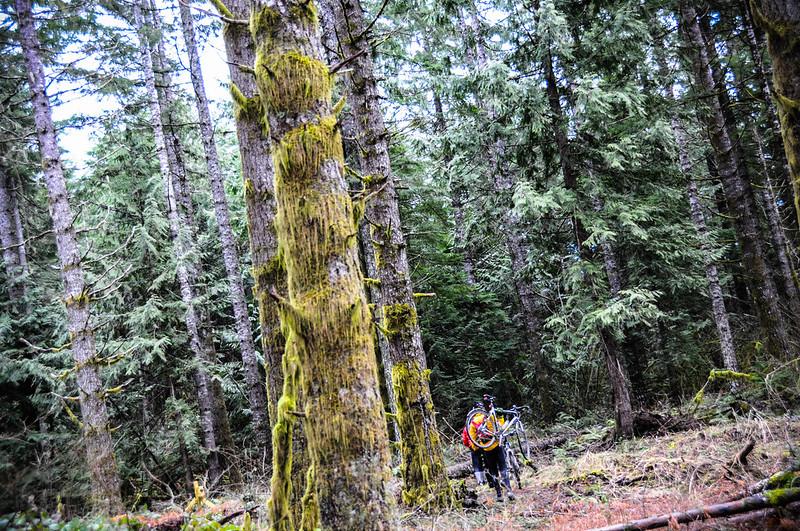 Timber Logjam-49.jpg