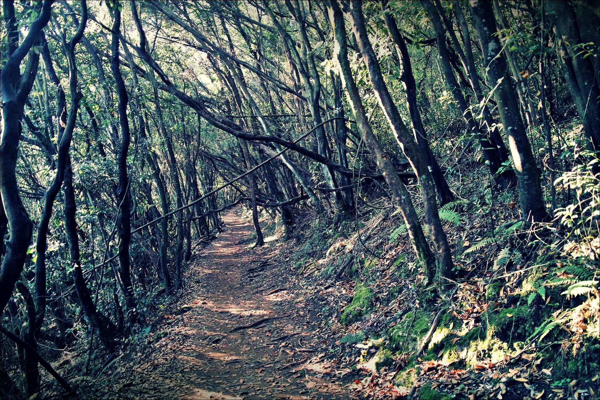 숲길-'카미노 데 산티아고 북쪽길. 산토냐에서 노하. (Camino del Norte - Santoña to Noja)'