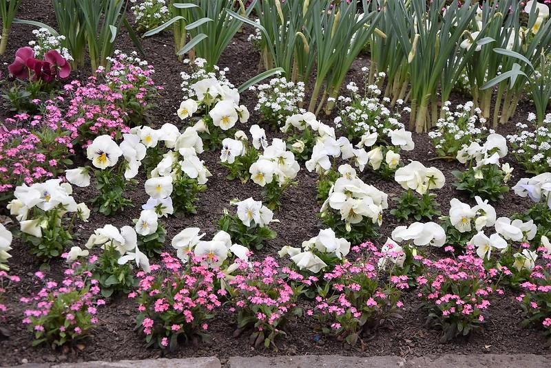 Flower beds 05.04 (4)