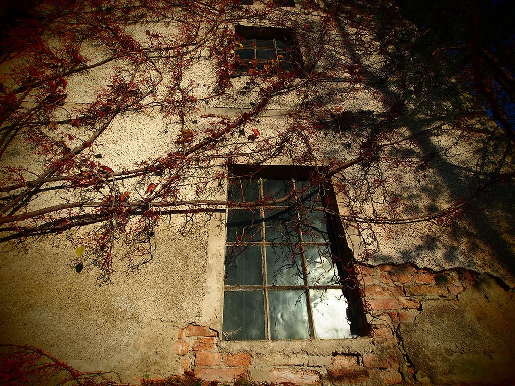 altes sägewerk | altes gemäuer, sägewerk und mauerpflanzen | roland