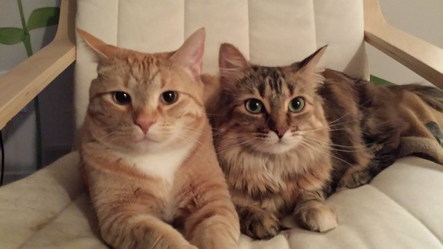 Cute kitties for my 404 page