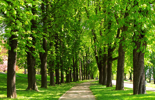 Chestnut-lined Avenue in Spring | by Batikart