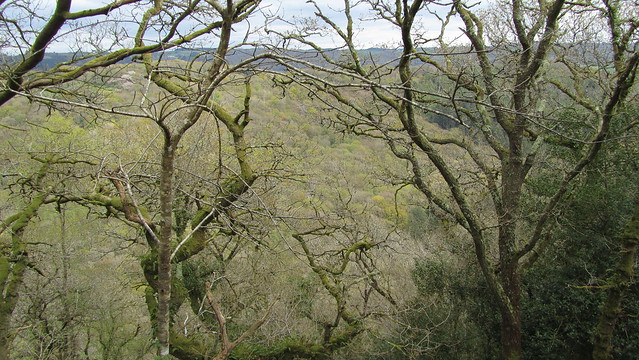 View from the fort, of Lustleigh Cleave