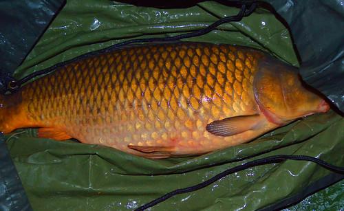 Купить большую рыбу во сне