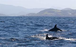"""""""Cetáceos a las 10"""": salidas al mar en barco para avistamiento de cetáceos"""