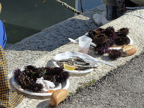oursins sur le port