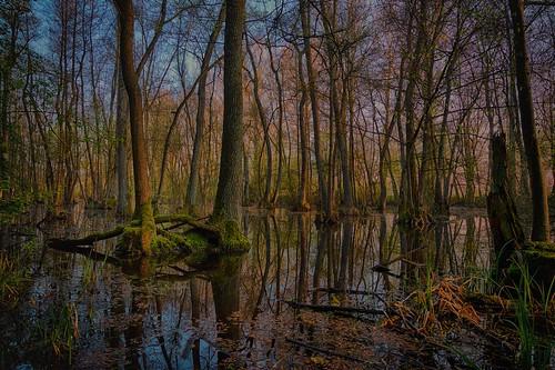 Sunrise in a riparian forest