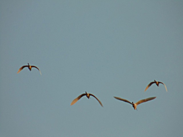 Birds Take Off - Sweeping The Sky