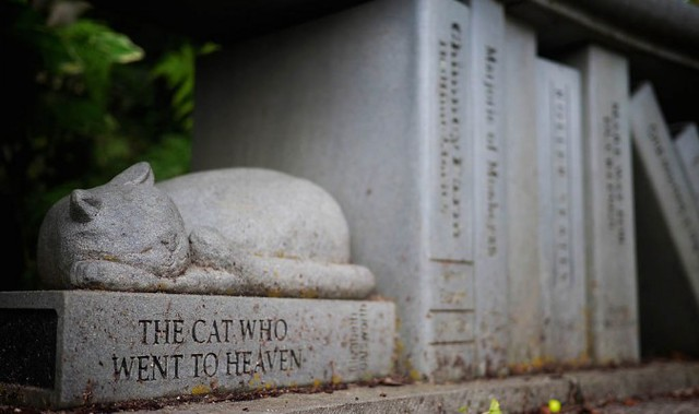 Cat_Go_Heaven