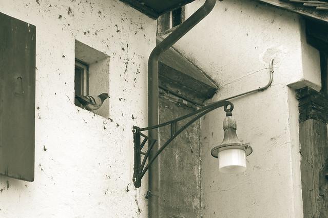 la colombe à la lanterne