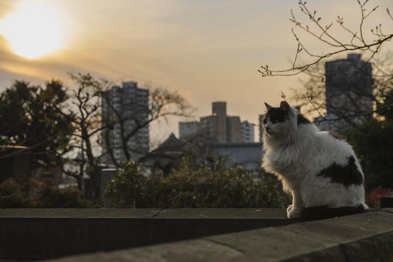Twilight Tokyo, under the bud