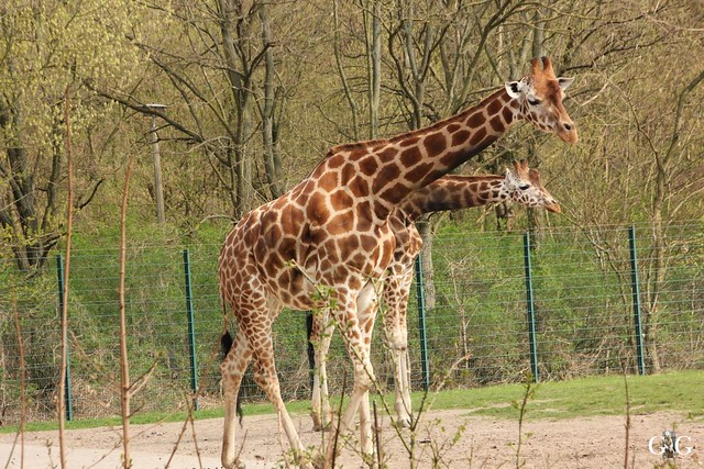 Frühlingstag Tierpark Friedrichsfelde am 02.04.2017117