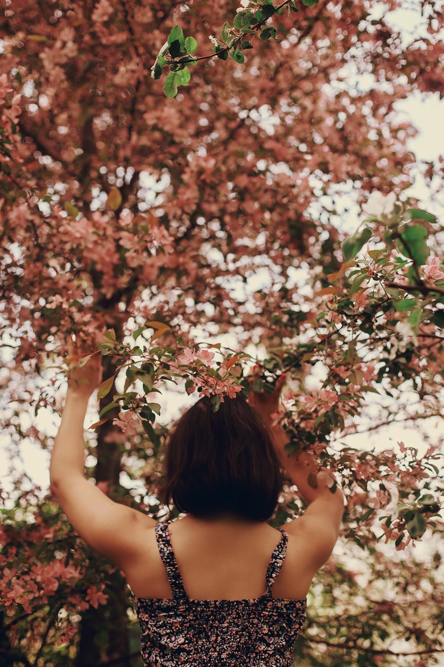 Цветущие розовые яблони / фотограф Ирелла Лисицына